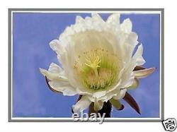 Nouveau HP Spectre X360 13-4103dx 13.3 Led LCD Assemblage De Numériseur D'écran Fast